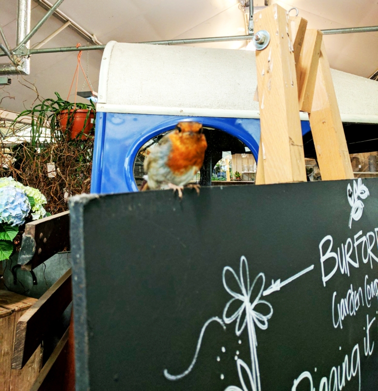 robin-at-garden-centre