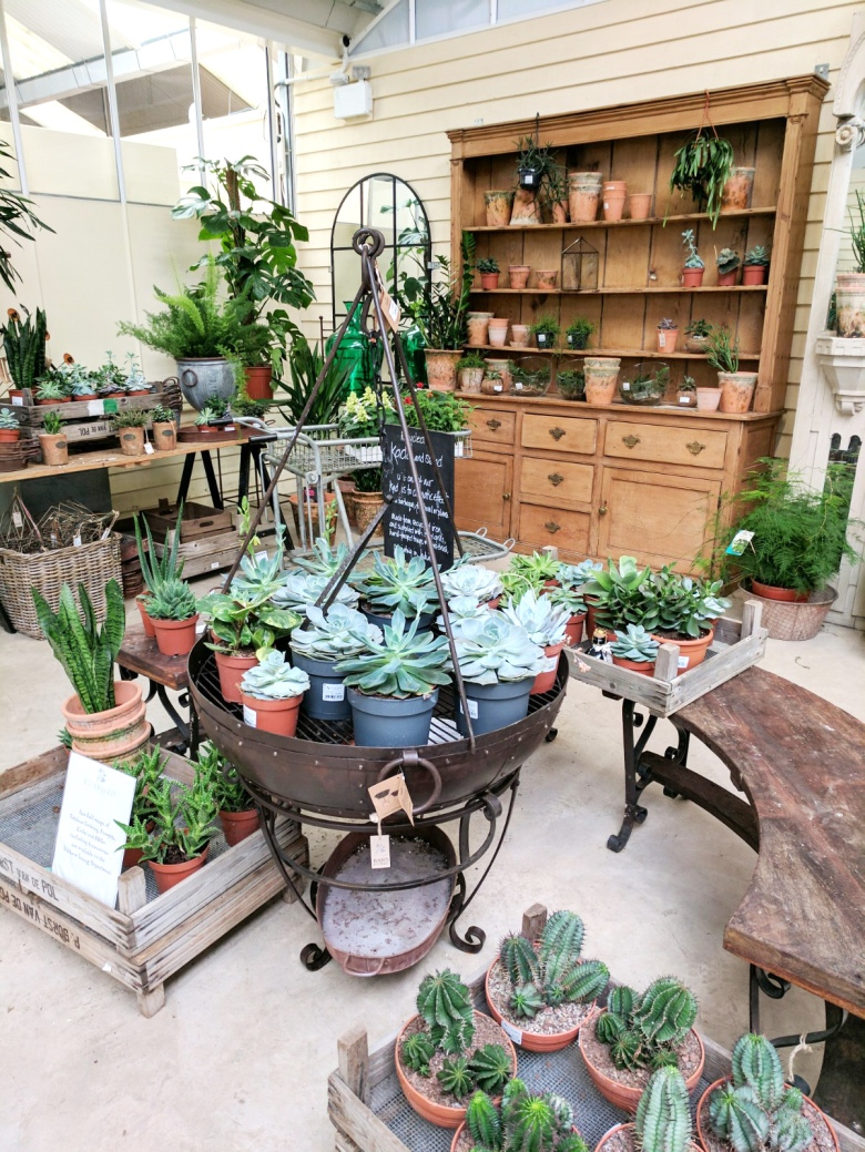 succulents-cacti-aloe-vera